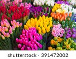 Tulips. Colored Bouquets Of...