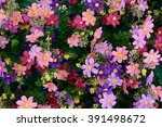 Pink And Purple Flower Garden ...