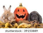 Two Rabbit And A Halloween...