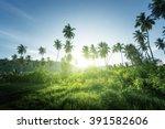 sunset in jungle  seychelles | Shutterstock . vector #391582606