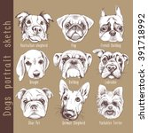 Set Of Dogs Portrait Sketch....