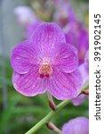 orchid  | Shutterstock . vector #391902145