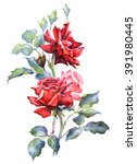 Watercolor Illustration. Red...