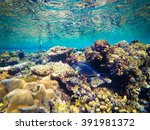underwater world of the red sea ... | Shutterstock . vector #391981372