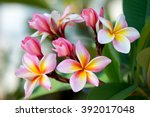 group of yellow white and pink... | Shutterstock . vector #392017048