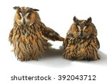 Stock photo two owl with on a white background 392043712