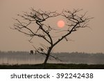 Dead Tree With Beautiful Sunset ...