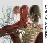 Human Anatomy Exploded View ...