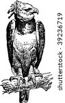 bird | Shutterstock .eps vector #39236719