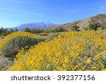 little yellow brittlebush...   Shutterstock . vector #392377156