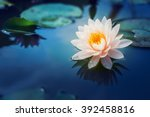 Beautiful Lotus Flower Is...