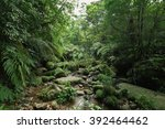 lush green tropical rainforest... | Shutterstock . vector #392464462