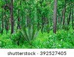 trees  forests  fertile | Shutterstock . vector #392527405