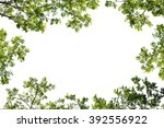 green leaf tree branch isolated ... | Shutterstock . vector #392556922