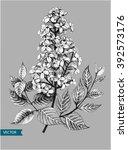 lilac or syringa vulgaris... | Shutterstock .eps vector #392573176