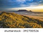 table mountain  cape town ... | Shutterstock . vector #392700526