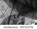 leaf texture   detail   Shutterstock . vector #392722756