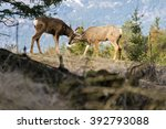 buck and doe mule deer nuzzling | Shutterstock . vector #392793088