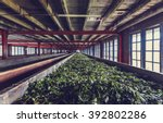 production of processing tea... | Shutterstock . vector #392802286