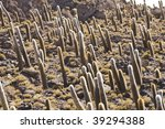 fine image of cactus in bolivia ... | Shutterstock . vector #39294388