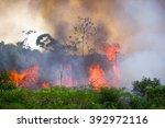 brazilian amazon forest burning ... | Shutterstock . vector #392972116