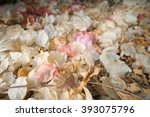 Dried Bougainvillea On The...