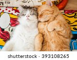 Stock photo there are two cats sleeping on the pillow 393108265