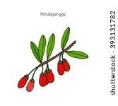 goji berry  lycium barbarum  or ... | Shutterstock .eps vector #393131782