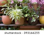 potted plants | Shutterstock . vector #393166255