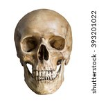 Human Skull  Isolated On White...