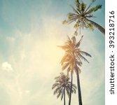 Palm Trees At Tropical Beach...