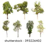 collection of isolated tree on... | Shutterstock . vector #393226402
