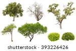 Collection Of Isolated Tree An...