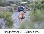 two male lions in a typical... | Shutterstock . vector #393295492