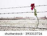 a rose on the barbed wire fence ... | Shutterstock . vector #393313726