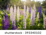 the field of wild multicolored...   Shutterstock . vector #393340102