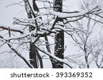 snow on tree branches. winter... | Shutterstock . vector #393369352