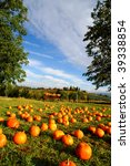 Pumpkins Out In A Farm Grassy...