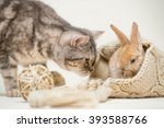 Stock photo cute small red easter bunny sitting in knitted hat afraid of grumpy cat on homogenous off white 393588766
