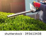 Cutting a hedge with electrical hedge trimmer. Selective focus - stock photo
