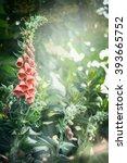 Pretty Foxglove Flowers In...