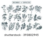 herbs and spices set. hand...   Shutterstock .eps vector #393802945