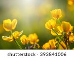 field of spring flowers and... | Shutterstock . vector #393841006