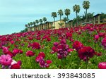 Rows Of Colorful Flowers Grow...