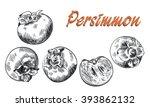 persimmon sketches set | Shutterstock .eps vector #393862132