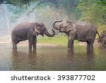 Asian Elephant In A Nature...