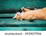 funny red kitten cat sleeping... | Shutterstock . vector #393907906