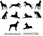 Stock vector dog breed dog vector graphic animal illustration art picture 393932782
