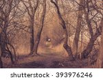 Spooky Trail In A Forest In Th...