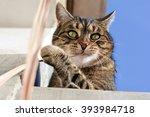 Stock photo cute cat playing outdoors 393984718